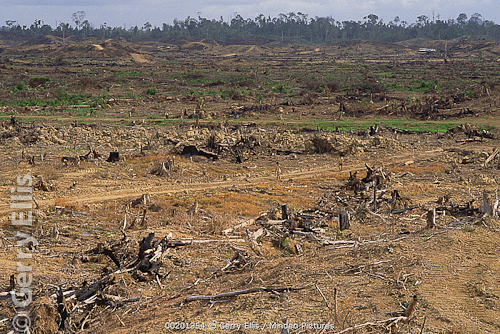 clear cut Bornean rainforest